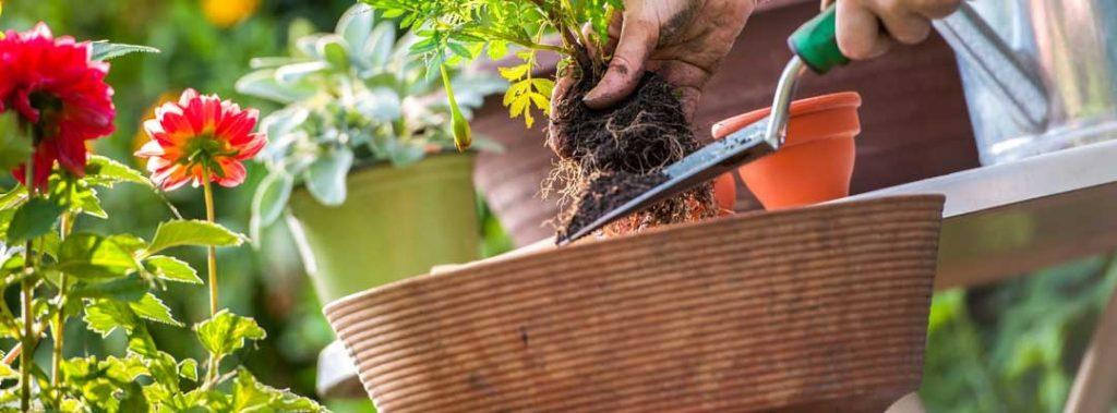 нанять садовника с загородный дом в Санкт-Петербурге