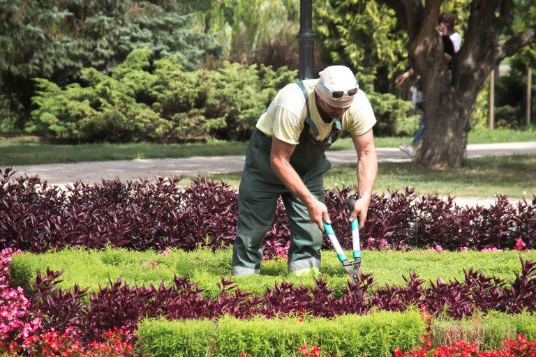 нанять садовника в Санкт-Петербурге